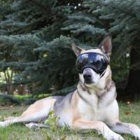 Тактические очки Rex Specs