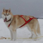 SLED PRO HARNESS